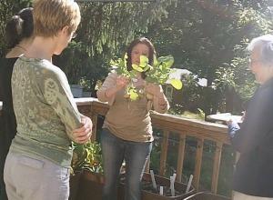 get organic gardening tips