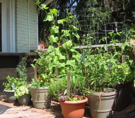 summer container garden 1